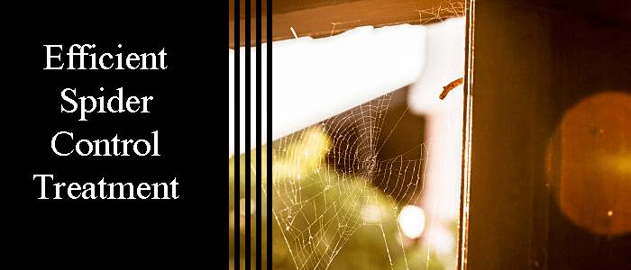 Efficient Spider Control Treatment