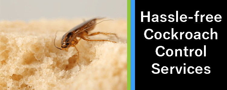 Hassle-free Cockroach Control Service