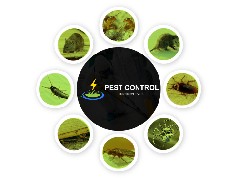 Pest Control Southern River